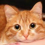 Todo para tu gato online